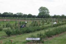 Gooseberry-farm