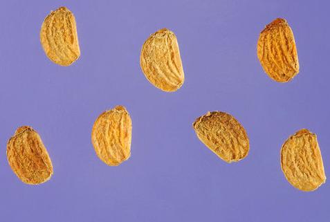 Gotu-Kola-Seeds