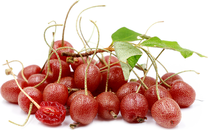 Goumi-Berry
