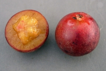 Governor's-plum-cut