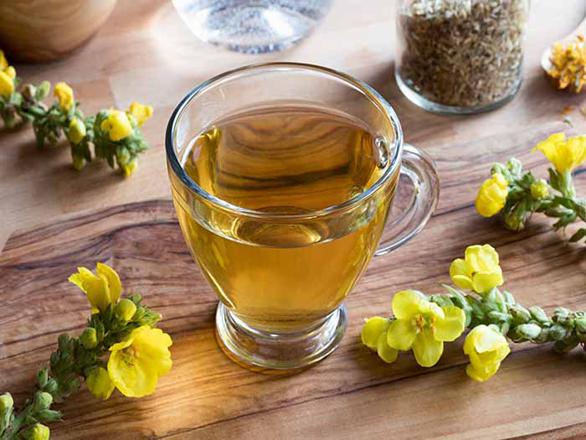 Great-mullein-tea