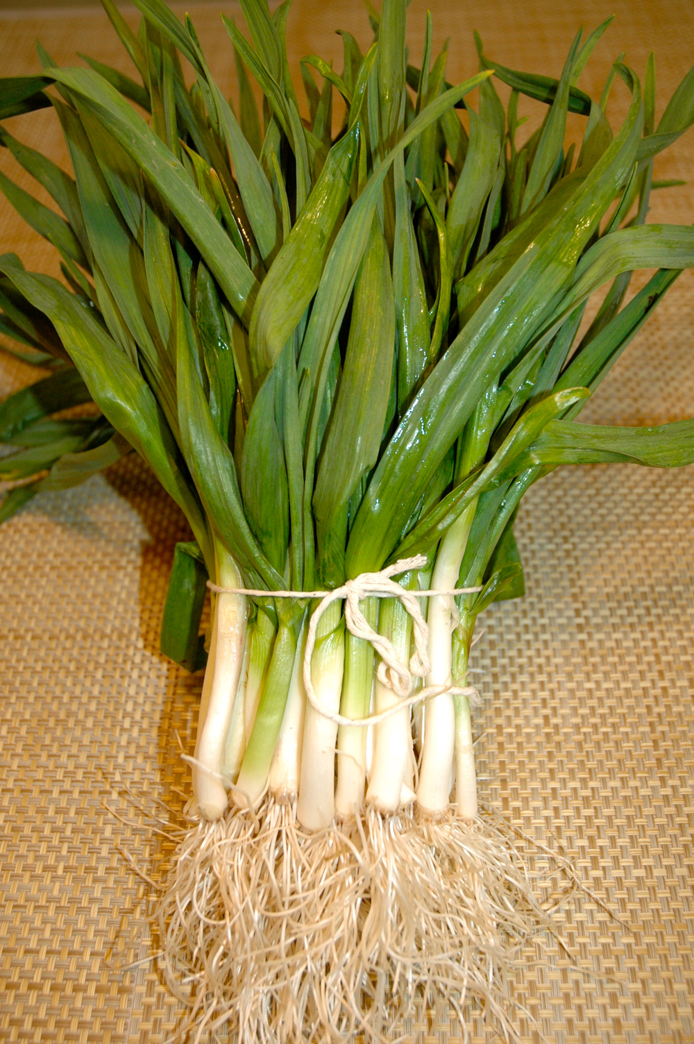 top health benefits of green garlic | hb times