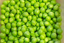 Green-peas-seeds