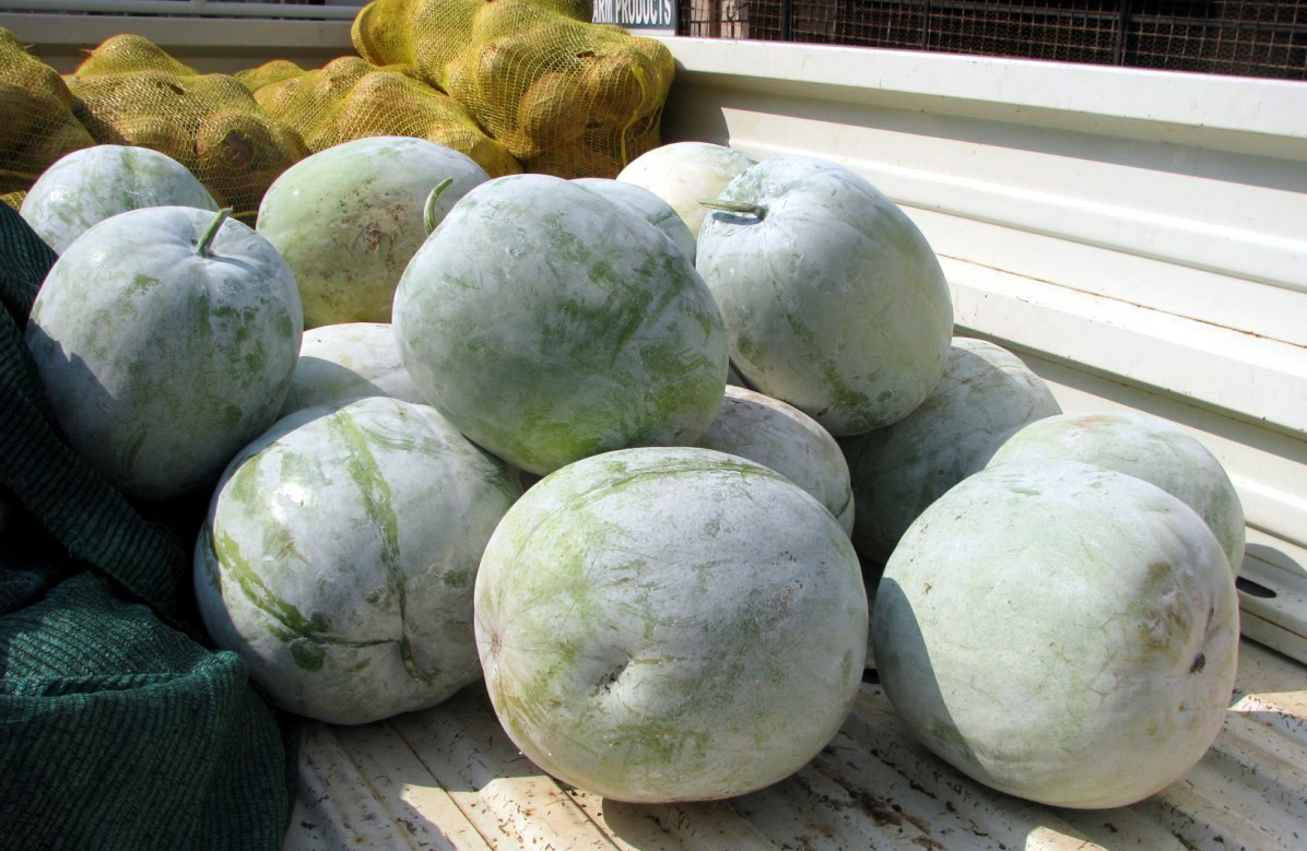 Hairy-cucumber-fruits