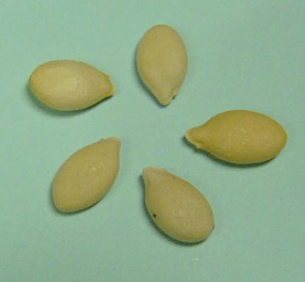 Hairy-cucumber-seeds