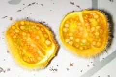 Half-cut-Hairy-Eggplant