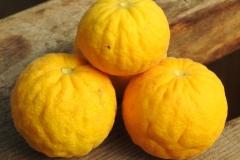 Hardy-orange