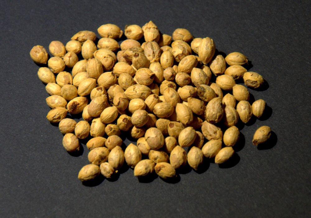 Hawthorn-berry-seeds