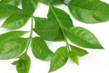 Henna-leaves