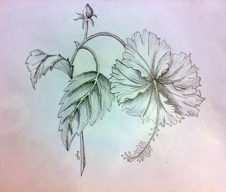 Sketch Of Hibiscus