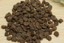 Seeds-of-Hibiscus