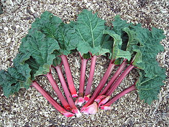 Leaves-of-Himalayan-Rhubarb