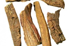 Dried-Himalayan-Rhubarb-herb