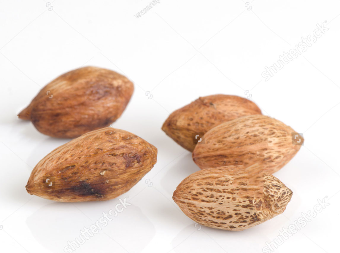 Seeds-of-Hog-plum