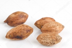 Seeds-of-Hog-plum