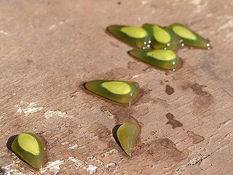 Seeds-of-Horned-melon