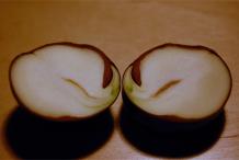 Half-cut-Horse-Chestnut