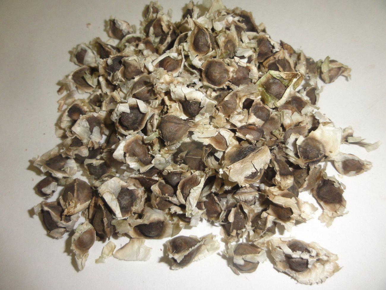Horseradish-seeds