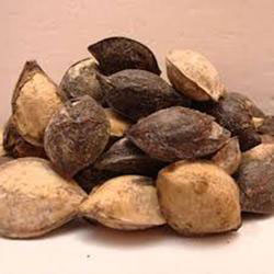 Seeds-of-Indian-almond