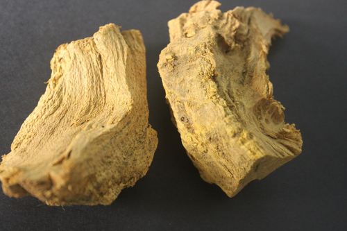 Indian-Barberry-root