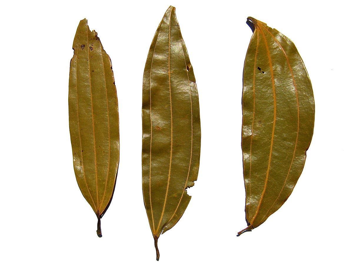 Indian-Bay-Leaf--Tejpat
