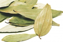 Indian-Bay-Leaf--Tamālapatra