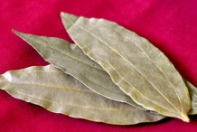 Indian-Bay-Leaf--Indian-Bark