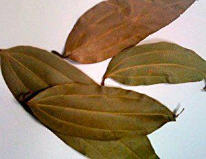 Indian-Bay-Leaf--Tamala-cassia