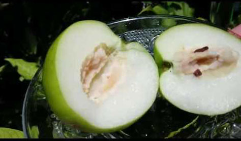 Half-cut-fruit-of-Indian-Jujube