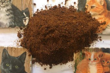 Seed-powder-of-Intellect-tree