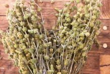 Dried-Ironwort-plant