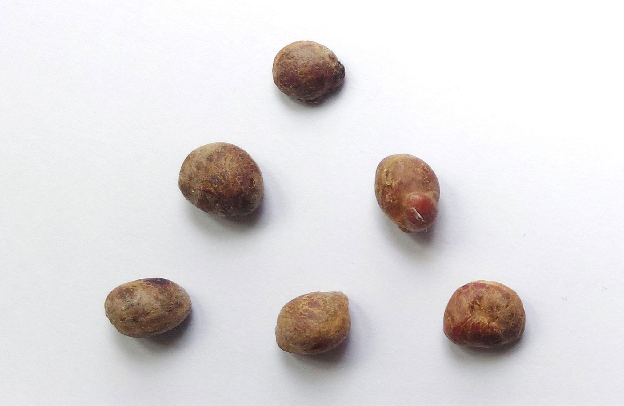 Seeds-of-Jaboticaba