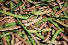 Mature-Jack-beans