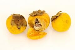 Mature-fruits-of-Jackalberry