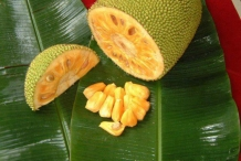 Jackfruit-cut-Banun
