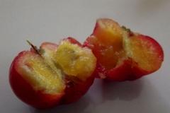 Half-cut-Jamaica-cherry-fruit