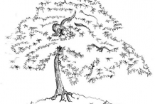 Sketch-of-Japanese-Maple