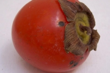 Close-view-of-Japanese-Persimmon-fruit