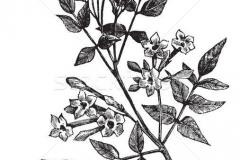 Sketch-of-Jasmine
