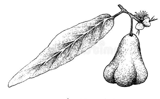 Sketch-of-Java-apple