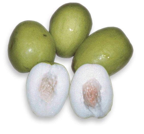 Jujube facts and health benefits