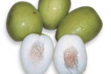 Jujube-fruit-green-cut