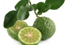 Kaffir-Lime