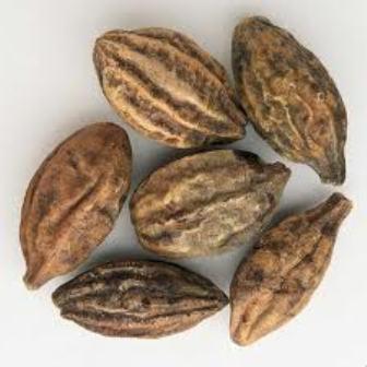 Kakadu-plum-seeds