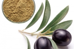 Leaf-extract-of-Kalamata-Olives
