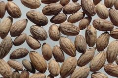 Seeds-of-Kalamata-Olives
