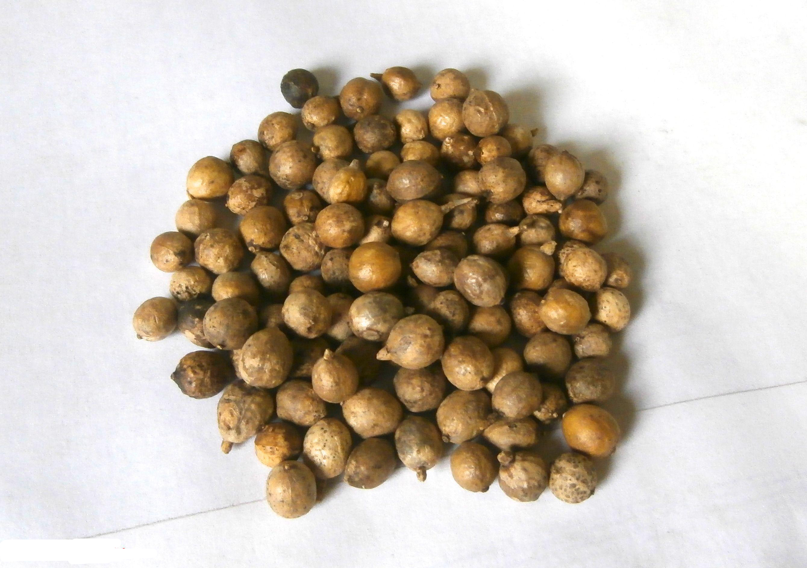 Kale-seeds