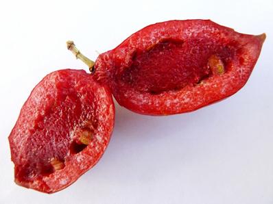 Half-cut-Karanda-fruit