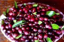 Ripe-Karanda-fruit-on-the-plate
