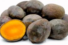 Kalimantan-mangoes-collection